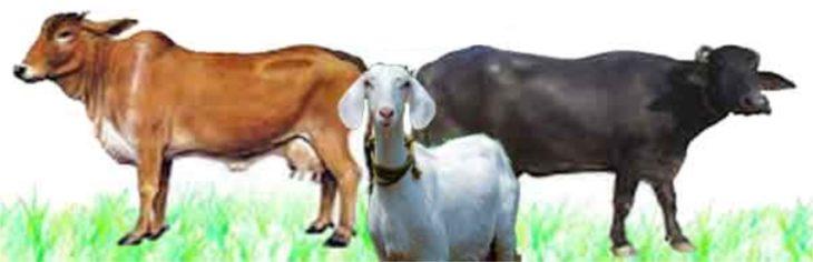 पशुपालन व्यवसाय की सम्पूर्ण जानकारी