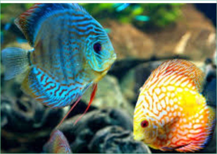 मछली पालन कैसे आरंभ करें