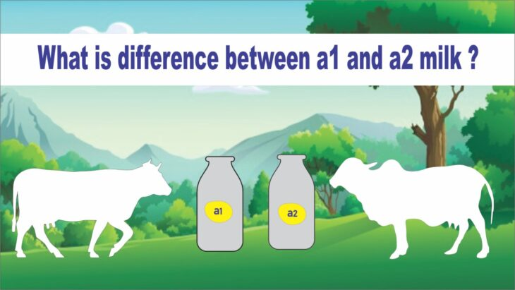 The benefits and risks of A2 milk