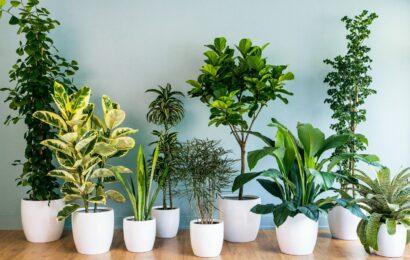 Indor Plant Benefits