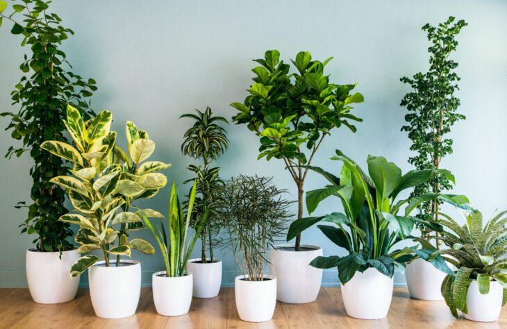 कुछ पौधे जिन्हें नवरात्रि में घर में लगाना शुभ माना जाता है